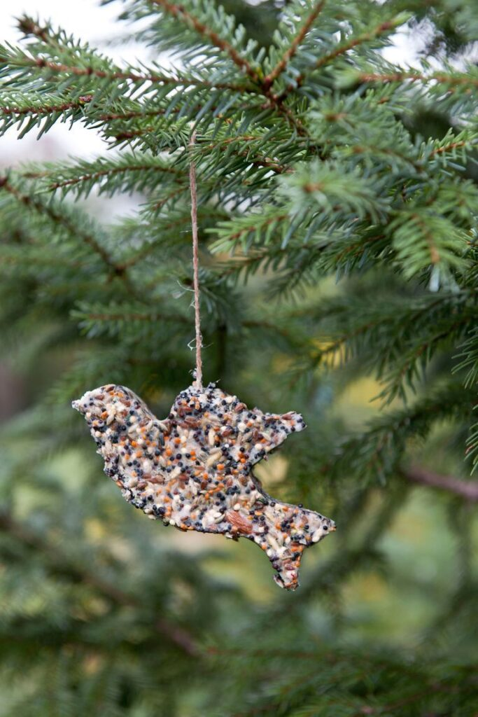 bird seed christmas activities for families